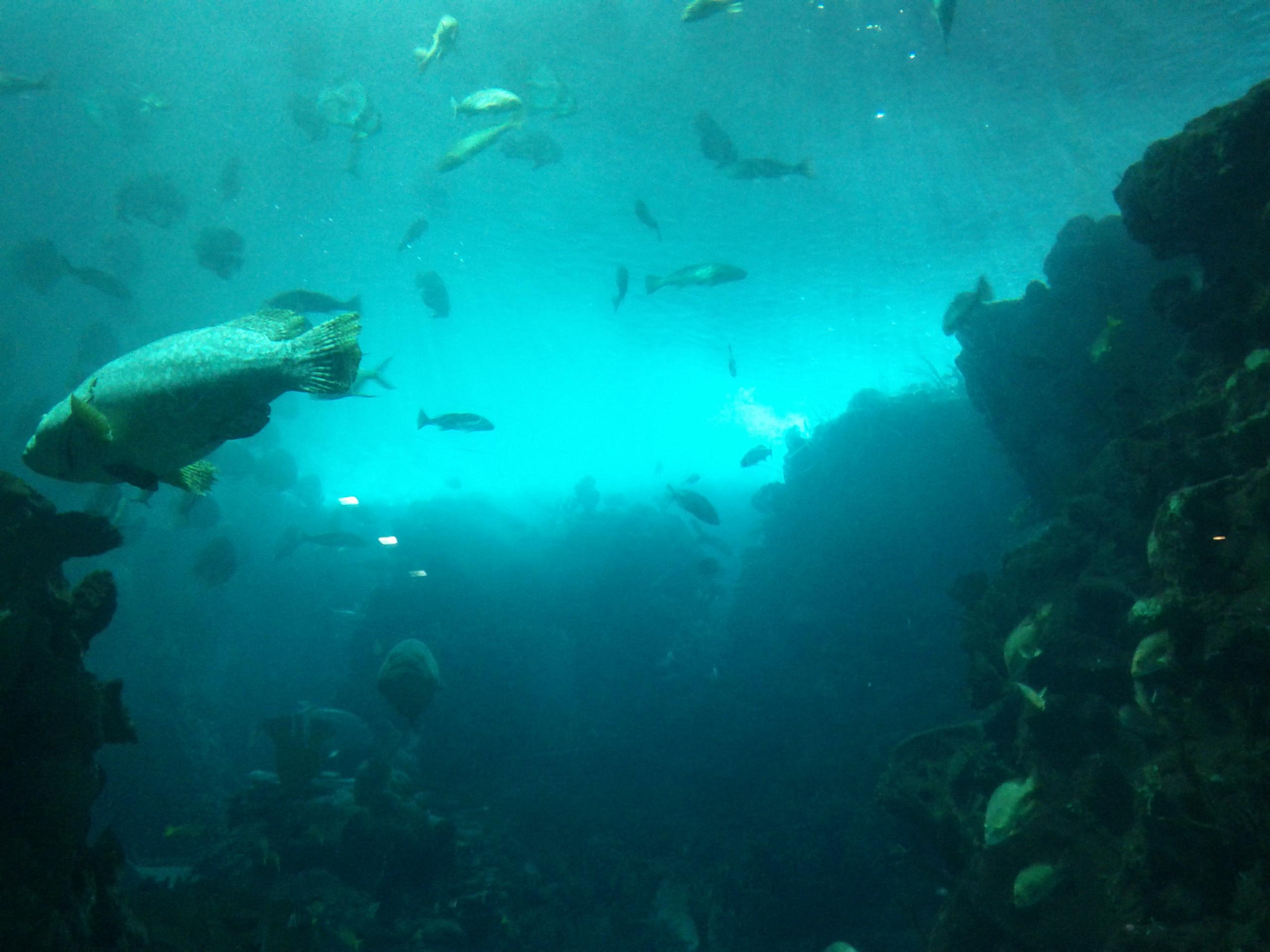 Big Sea fish at Guangzhou zoo aquarium