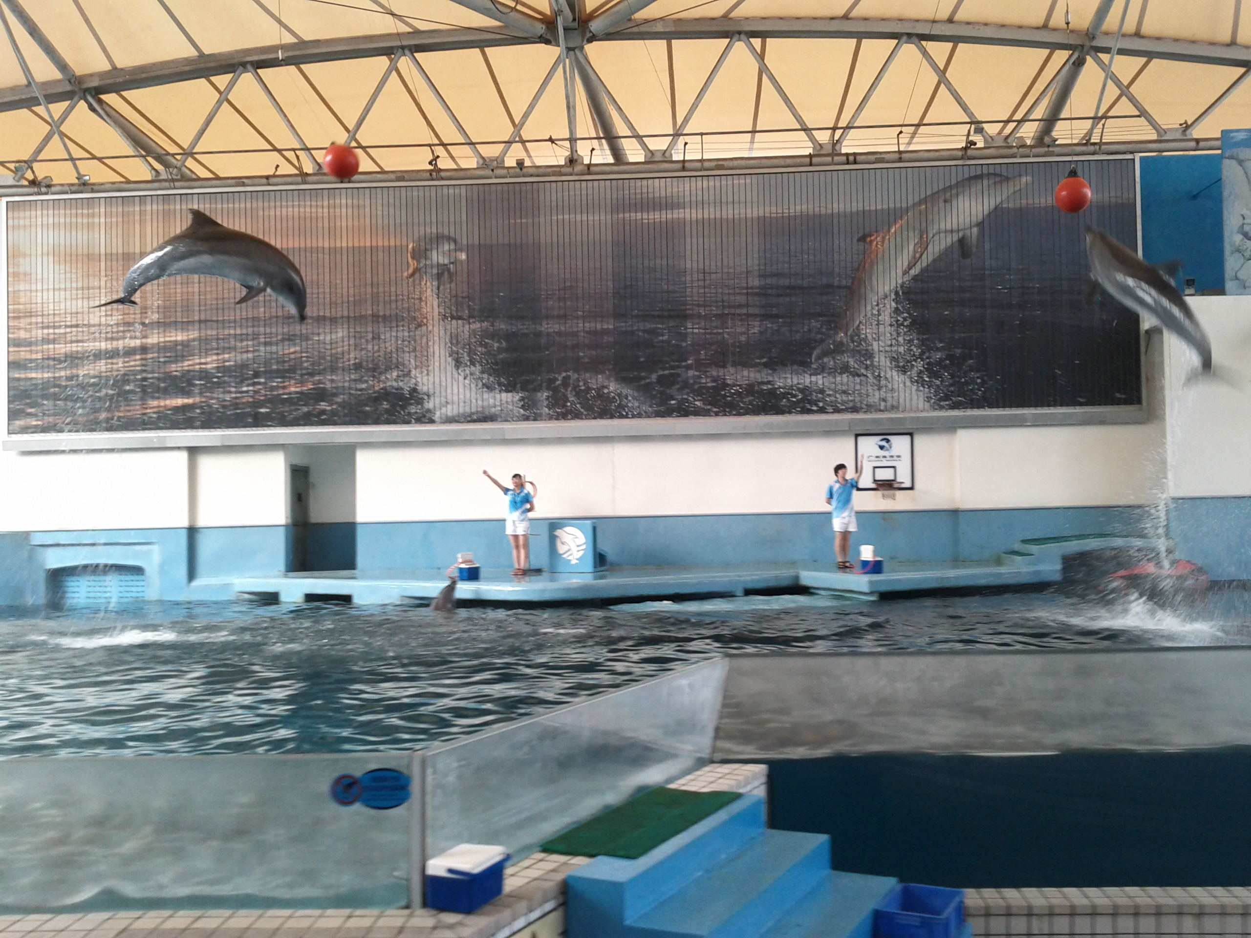 Dolphins jumping high at Guangzhou Zoo