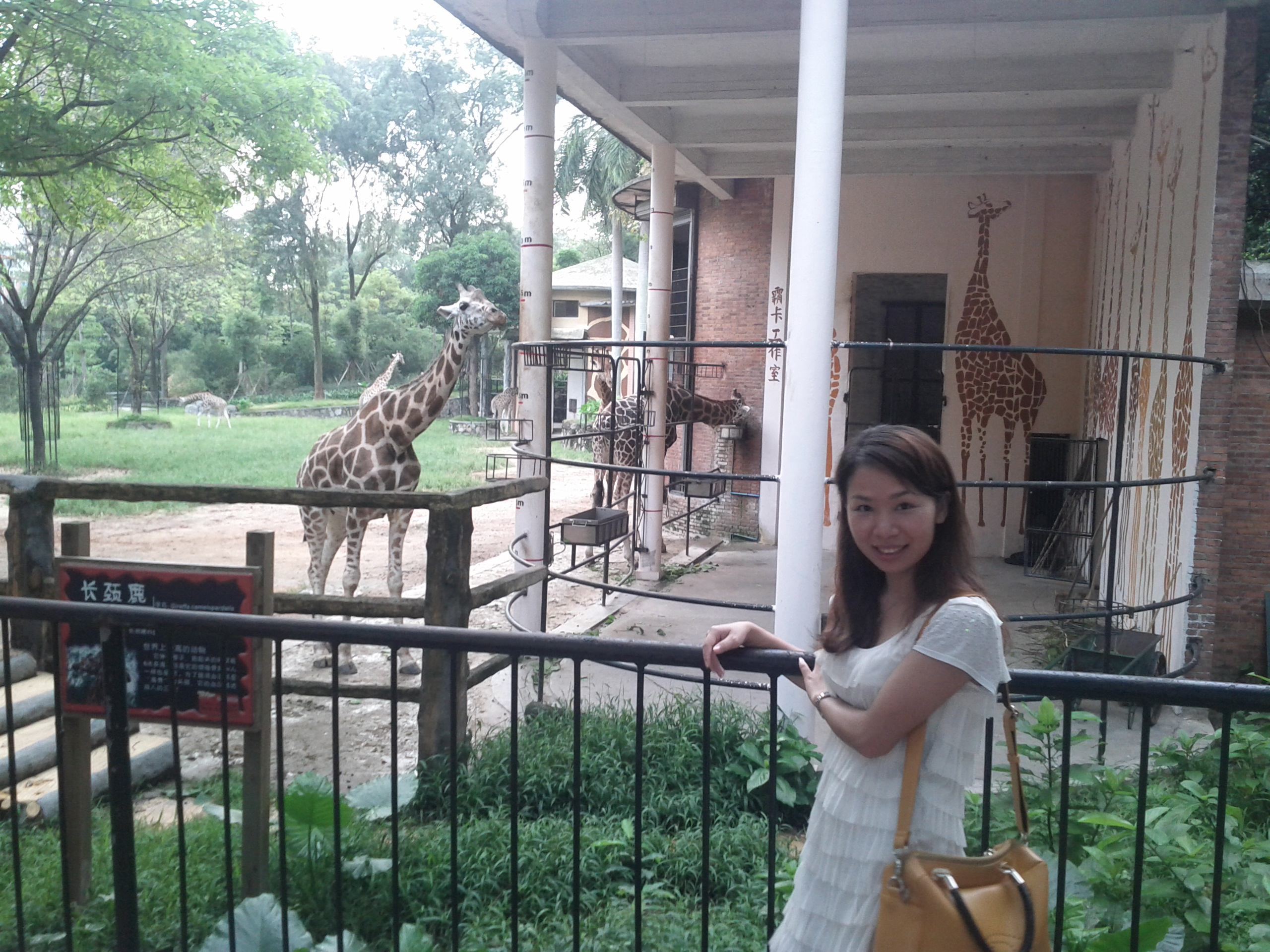 Yoyo and Giraffes at Guangzhou zoo